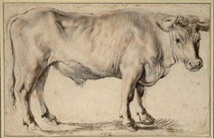 Albertina-Rubens-Ox.jpg