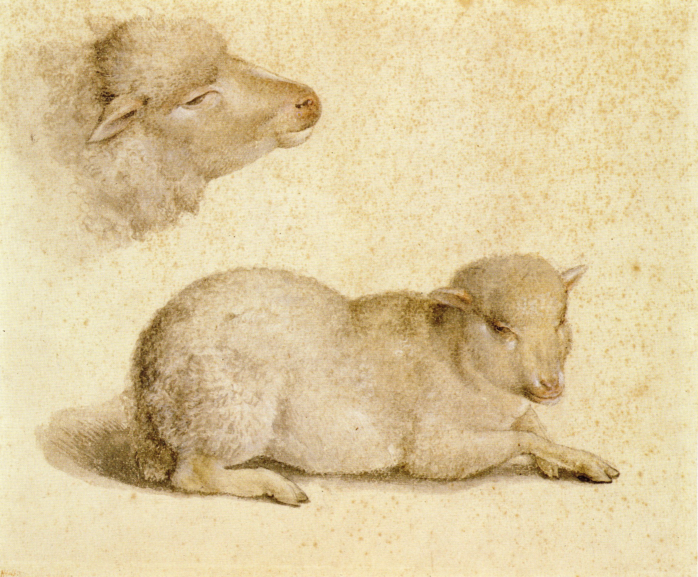 Resting_Lamb_and_Head_of_a_Lamb,_by_Hans_Holbein_the_Younger.jpg