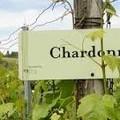 IDESÜSS! Chardonnay Nap-Borest a Borbárban