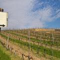 Zsirai pincészet: Tokaj, és Somló, Villány, édes és száraz borok