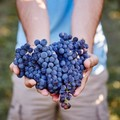 IDESÜSS! Pinot Noir vakteszt kóstoló a Borbárban