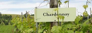 chardonnay3_2.jpg