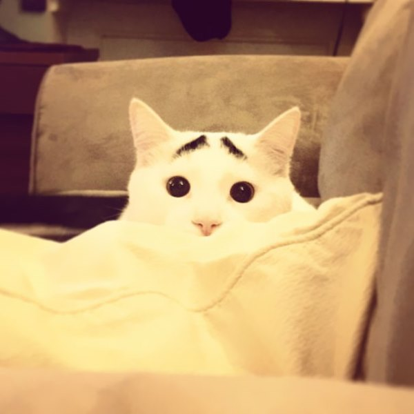 sam-cat-with-eyebrows-14.jpg