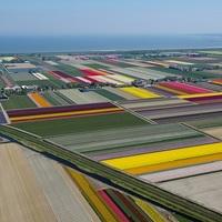 Tulipánmezők madártávlatból