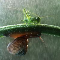 Mesebeli makropillanatok a kert végéből