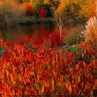 Őszi színorgia