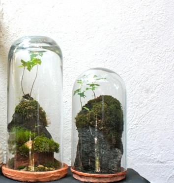 Mini Terr Rium N V Nyekkel Dekooder St Lusra Hangolunk