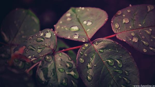 rain-drops-over-leafs-wallpaper.jpg