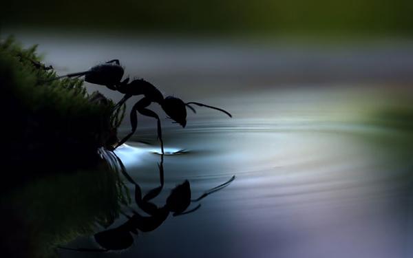 ant-drinking_2290151k.jpg