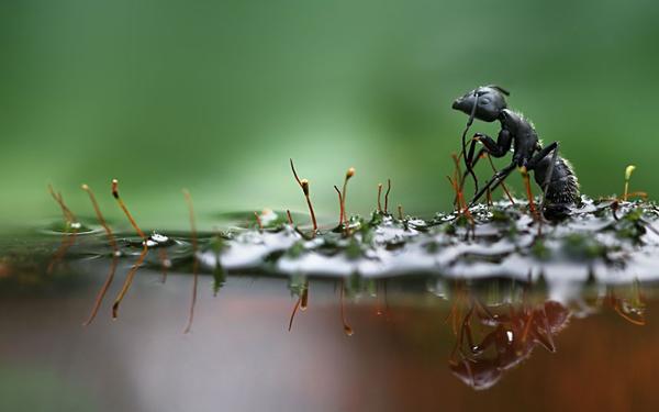 black-ant_2290155k.jpg