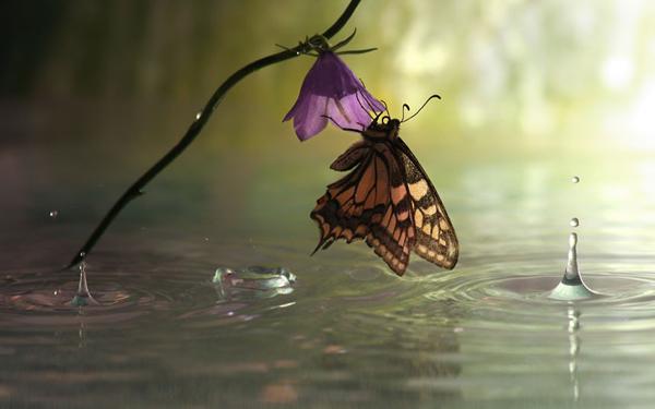 butterfly-clinging_2290138k.jpg