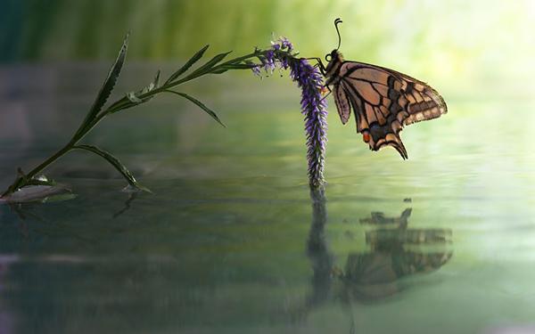 butterfly-flower_2290157k.jpg