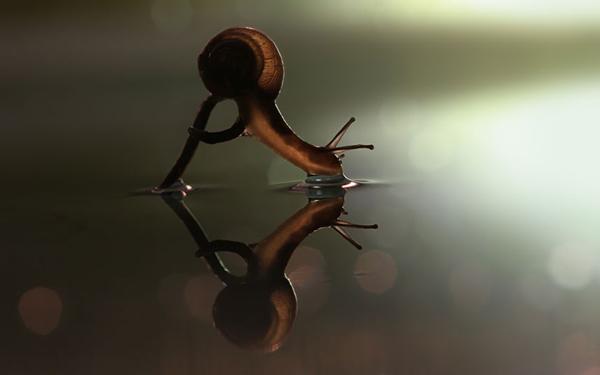 snail-drinking_2290156k.jpg