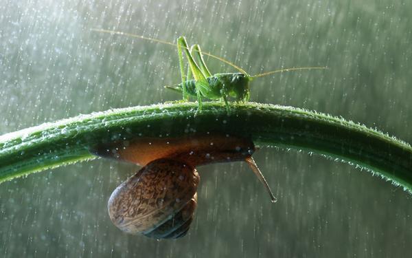 snail-grasshopper_2290145k.jpg