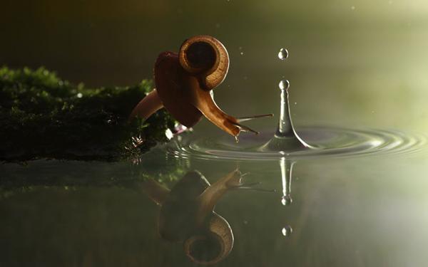 snail-on-mushroom_2290152k.jpg