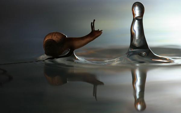 snail-water-drop_2290154k.jpg