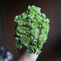 Rózsa növény(?). Újabb zöld csoda dekorésön!