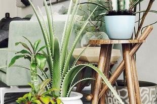 Egészséges dekorésön és zöldelő lakások