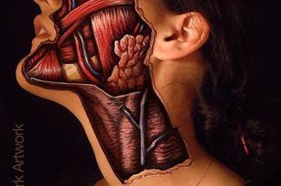 Az élethű test-dekorésön, ami megmutatja mi is van a bődör alatt
