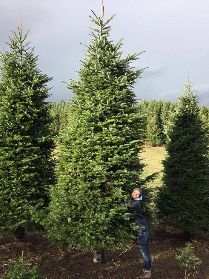 20ft-christmas-tree-cut-in-half-roof-2.jpg