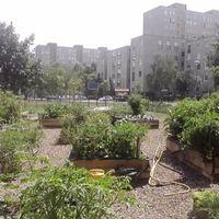 Közösségi kertek elleni izgatás