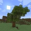 azália fa
