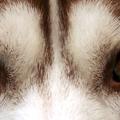 A mágneses mezőt kutyák és főemlősök is érzékelhetik