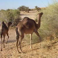 Január 28. Nouakchott - Kiffa