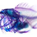 Döglött halak művészete Japánból