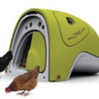 Csirkeól hobbiparasztoknak