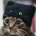 Péntek 13. - Black Cats