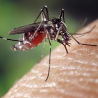 5 biztos tipp a természetes rovarriasztáshoz