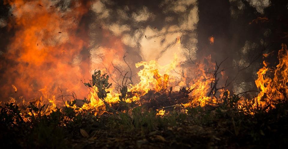 forest-fire-2268729_960_720.jpg