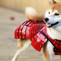Akár szamurájnak is öltöztetheted házi kedvencedet