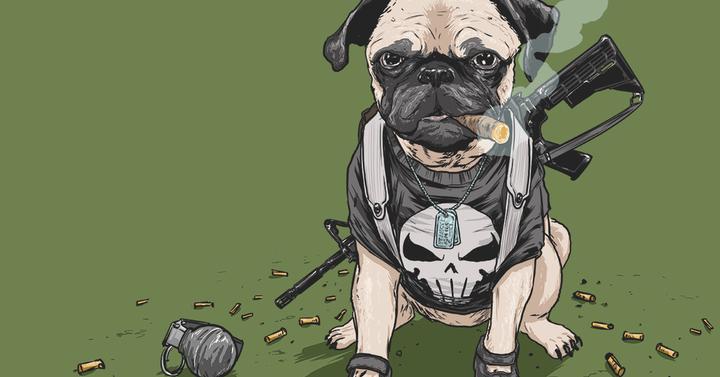 Marvel szuperhős kutyák!
