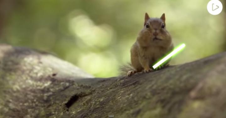 A jedi mókusok fénykardpárbajánál valószínűleg nincs csodálatosabb dolog a világon