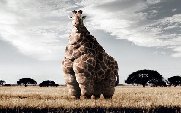 Így kerüld el az elhízást