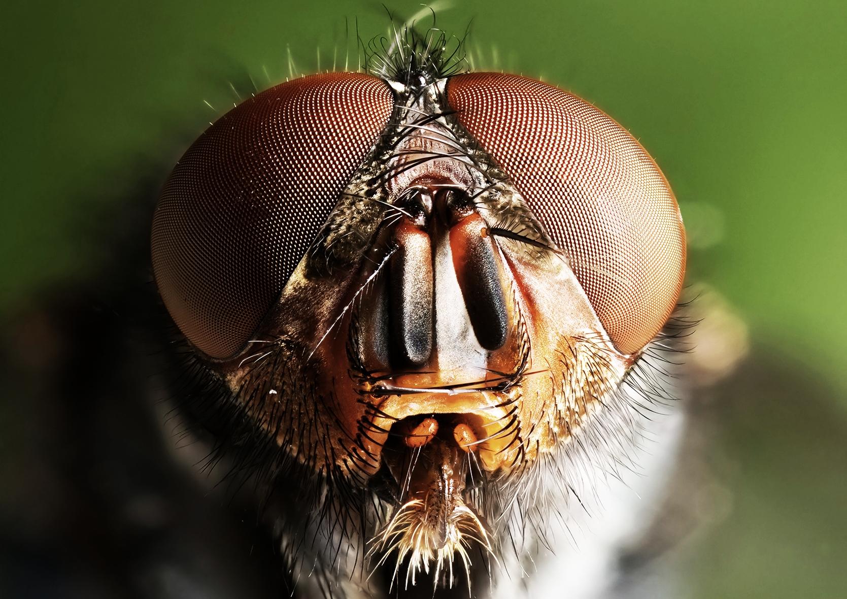 the_fly-1.jpg