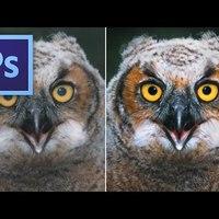 Photoshop tippek - Így készül a bagoly igazolványkép