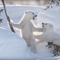 Jegesmedvét akarsz fotózni?