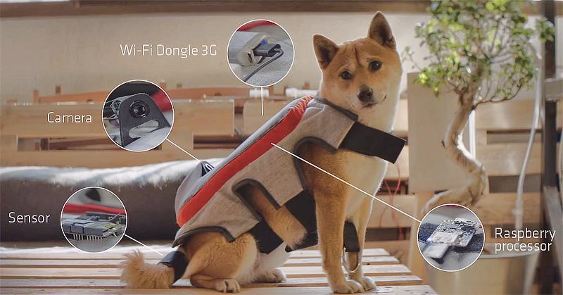 dog_camera.jpg