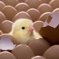 Inkubáció: befektetők, cégalapítás és csapatépítés