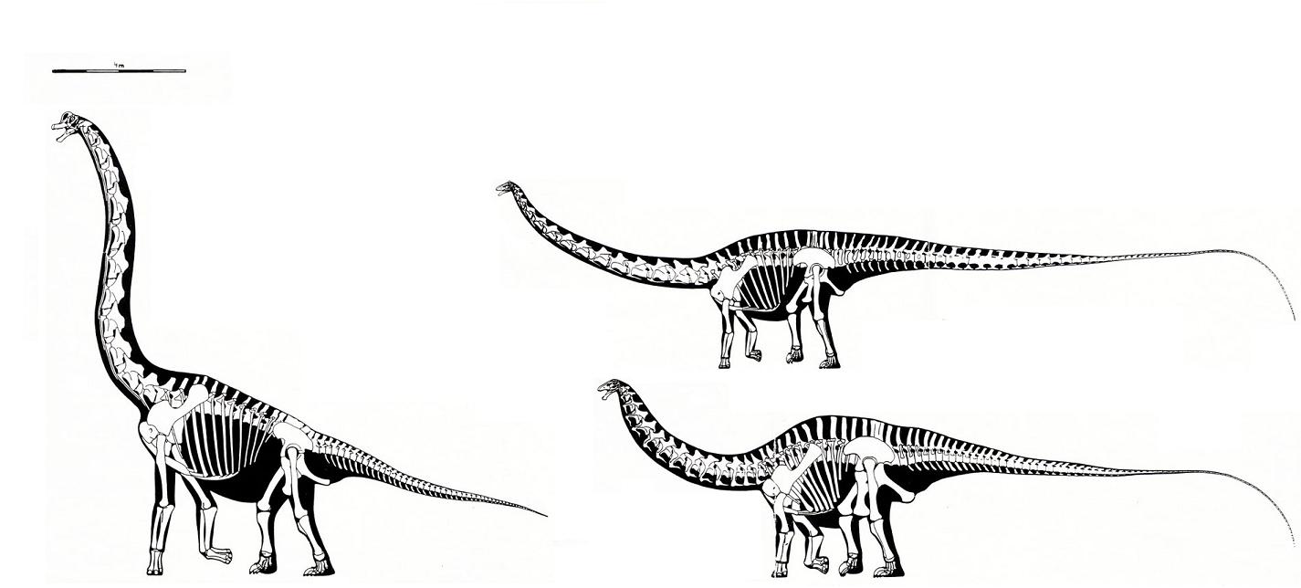 apatosaurus vs diplodocus - 1425×644