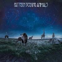 Pattern-Seeking Animals: Pattern-Seeking Animals (2019)