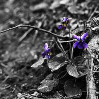 Tavasz a Gellért-hegyen