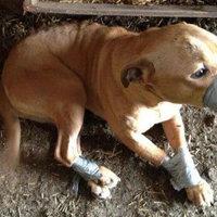 Állatkínzás – a törvény szigorítása nem megoldás