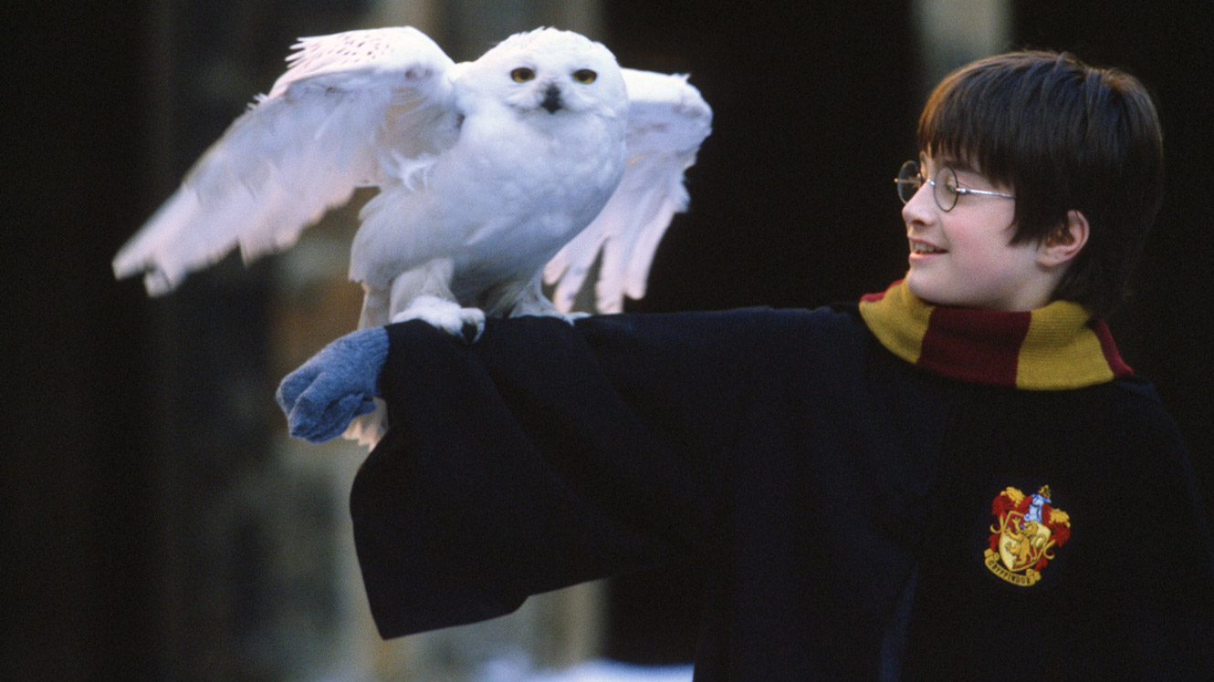 di-harry-potter-and-the-philosophers-stone-20.jpg