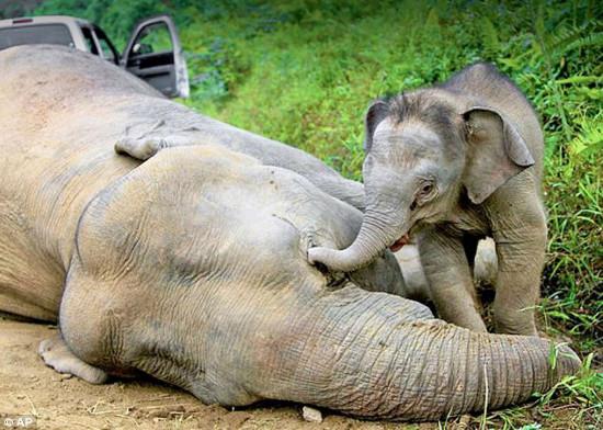 joe-elefant.jpg