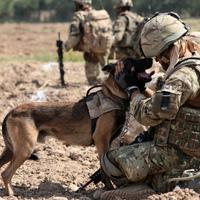 Nem lesz többé kutya melege az Afganisztánban szolgáló négylábúaknak