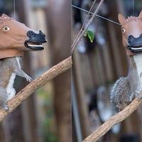 Lófej mókusok